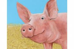 Schweinefrosch